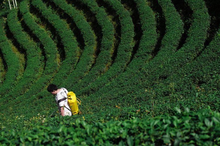 Man applying pesticides in a farm field